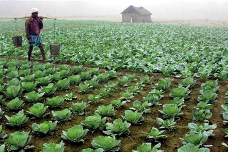 মোদির শস্য বীমা প্রকল্পে মুনাফা ৮৫%