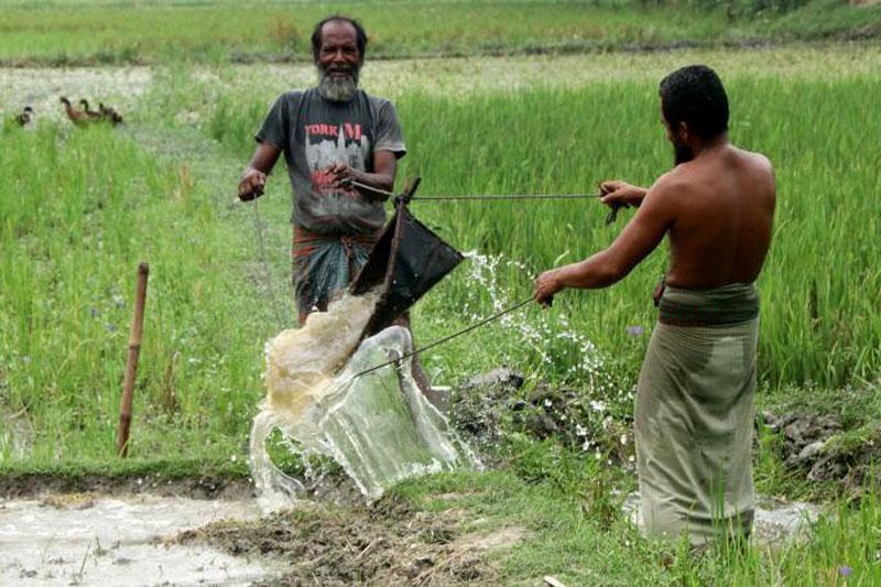 কৃষকদের জন্য বিনামূল্যে 'বাংলা শস্য বীমা'