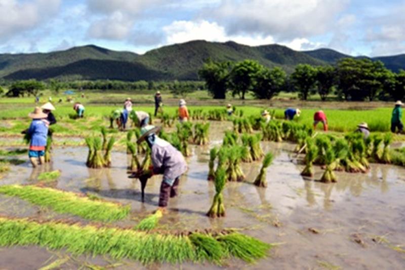 থাইল্যান্ডে সাড়ে ৮শ' কোটি টাকা শস্য বীমা দাবি পরিশোধ